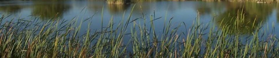 Aiguamolls a la província d'Alacant - les zones humides de la nostra província