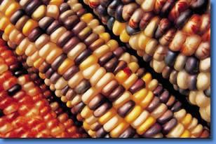 Maiz Colores Los Aztecas