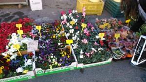 flores buena