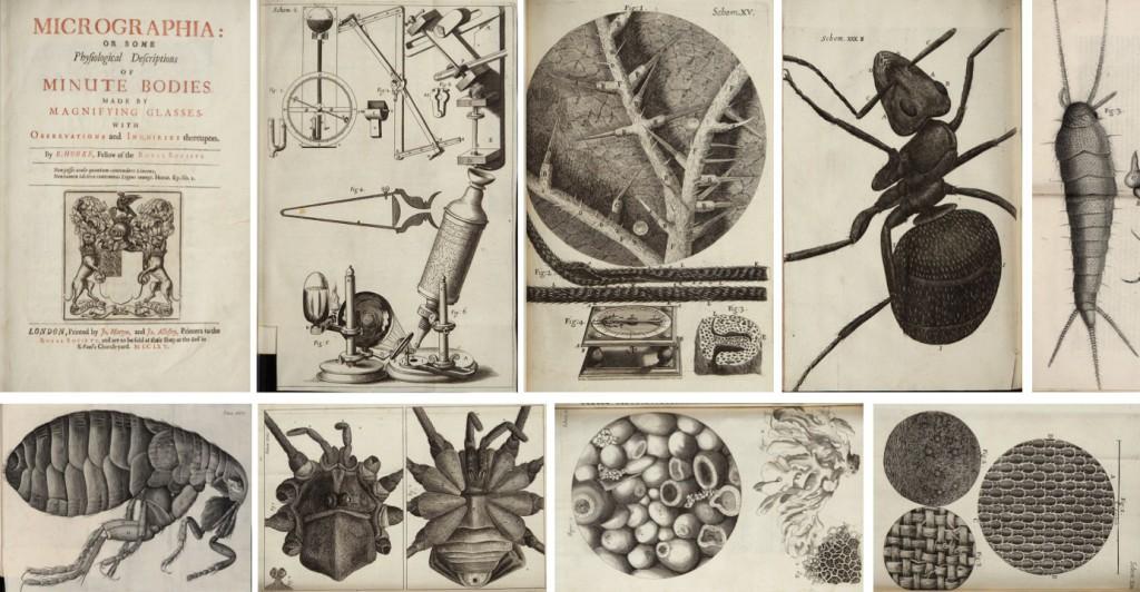 Micrographia-didujos