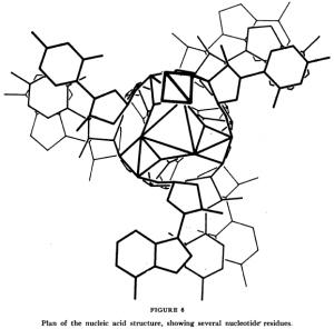 La triple hélice del ADN de Pauling