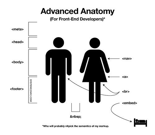 La anatomía humana explicada con HTML   Programación en Internet